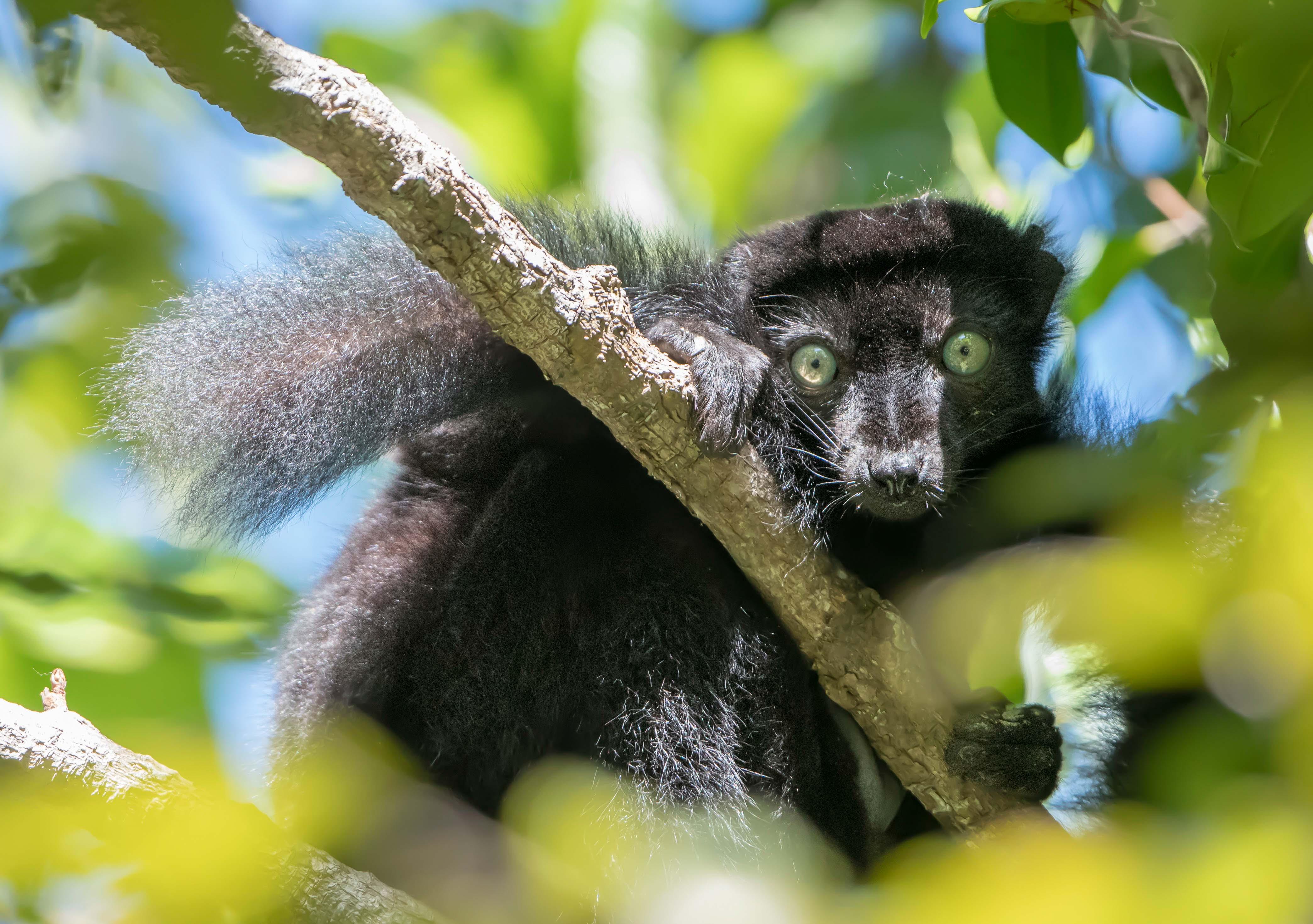 Unieke wandeling door de hooglanden van Madagascar » Matoke